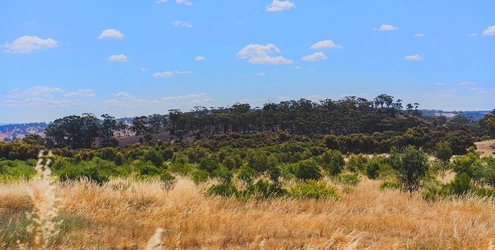 Western Australia - Planting Avondale Farm Barney Wilczak