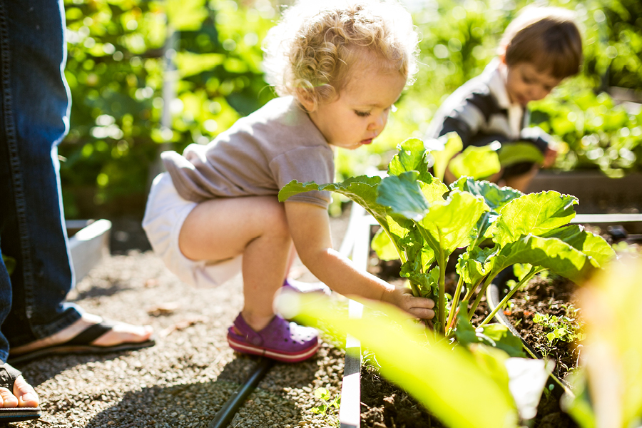 Gardening is a great incidental learning activity that teaches science and maths.
